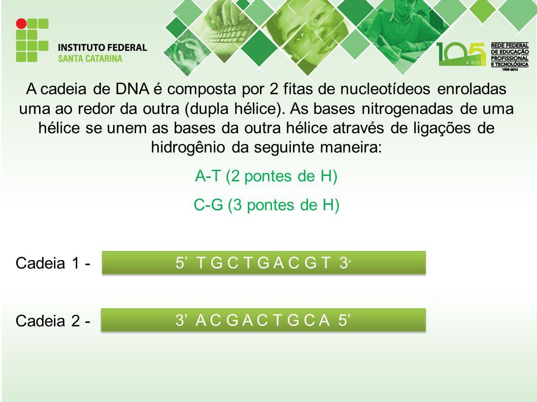 A cadeia de DNA é composta por 2 fitas de nucleotídeos enroladas uma ao redor da outra (dupla hélice). As bases nitrogenadas de uma hélice se unem as bases da outra hélice através de ligações de hidrogênio da seguinte maneira: A-T (2 pontes de H) C-G (3 pontes de H) Cadeia 1 - Cadeia 2 -