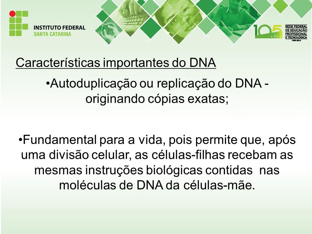 Autoduplicação ou replicação do DNA - originando cópias exatas;