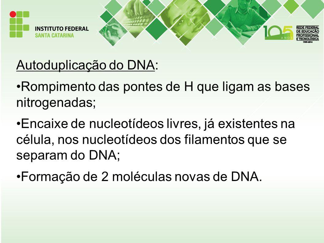 Autoduplicação do DNA: