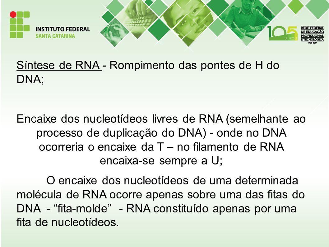 Síntese de RNA - Rompimento das pontes de H do DNA; Encaixe dos nucleotídeos livres de RNA (semelhante ao processo de duplicação do DNA) - onde no DNA ocorreria o encaixe da T – no filamento de RNA encaixa-se sempre a U; O encaixe dos nucleotídeos de uma determinada molécula de RNA ocorre apenas sobre uma das fitas do DNA - fita-molde - RNA constituído apenas por uma fita de nucleotídeos.