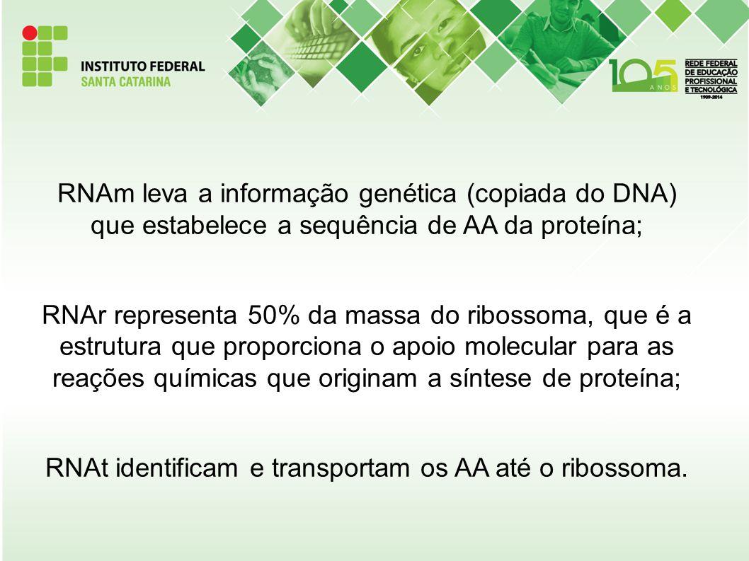 RNAm leva a informação genética (copiada do DNA) que estabelece a sequência de AA da proteína; RNAr representa 50% da massa do ribossoma, que é a estrutura que proporciona o apoio molecular para as reações químicas que originam a síntese de proteína; RNAt identificam e transportam os AA até o ribossoma.