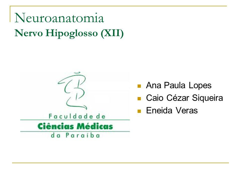 Neuroanatomia Nervo Hipoglosso (XII)