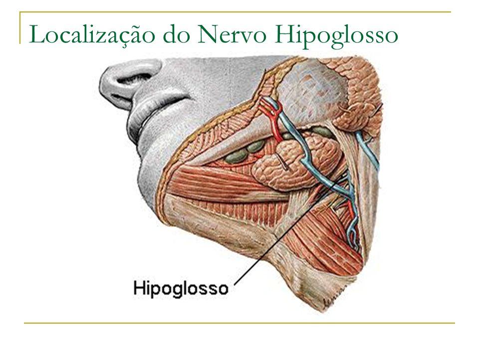 Localização do Nervo Hipoglosso