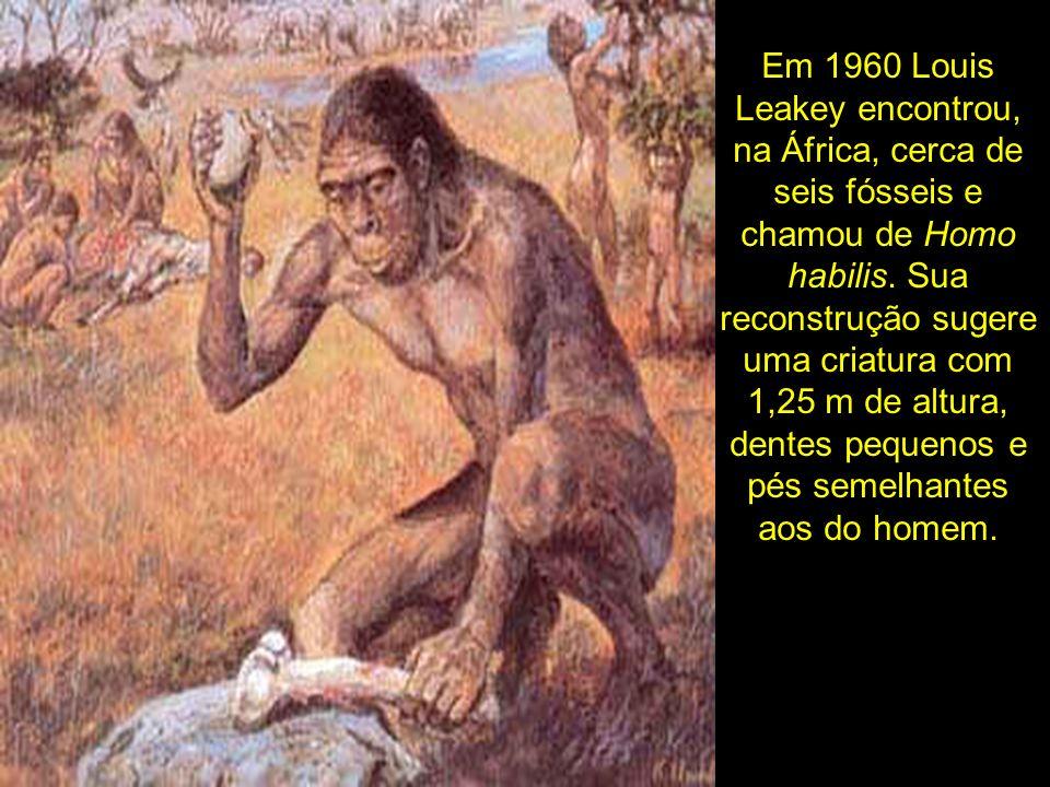 Em 1960 Louis Leakey encontrou, na África, cerca de seis fósseis e chamou de Homo habilis.