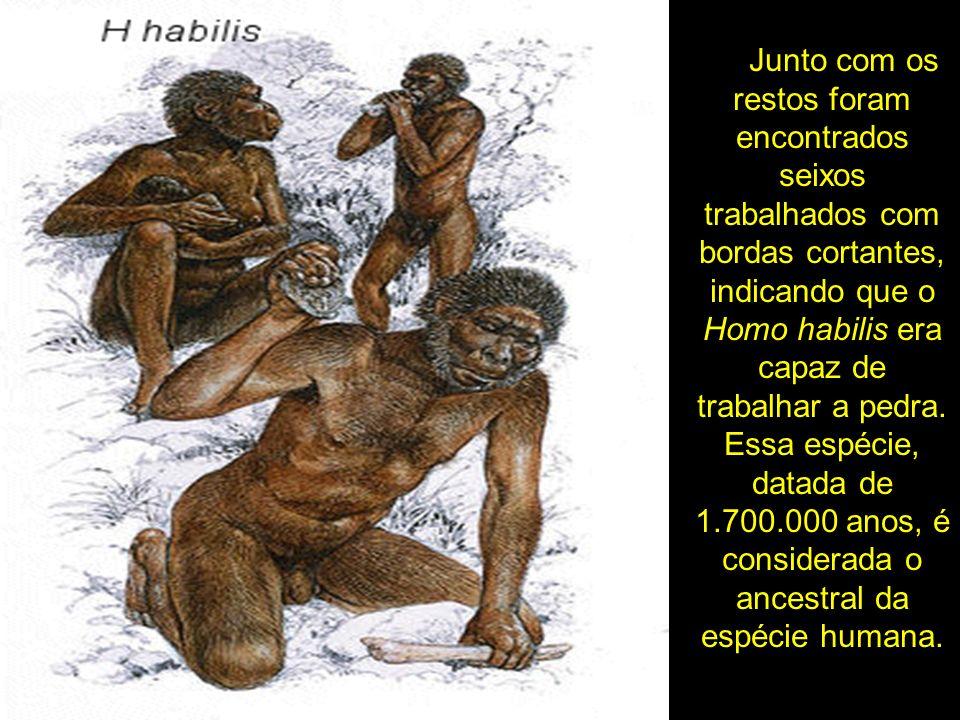 Junto com os restos foram encontrados seixos trabalhados com bordas cortantes, indicando que o Homo habilis era capaz de trabalhar a pedra.
