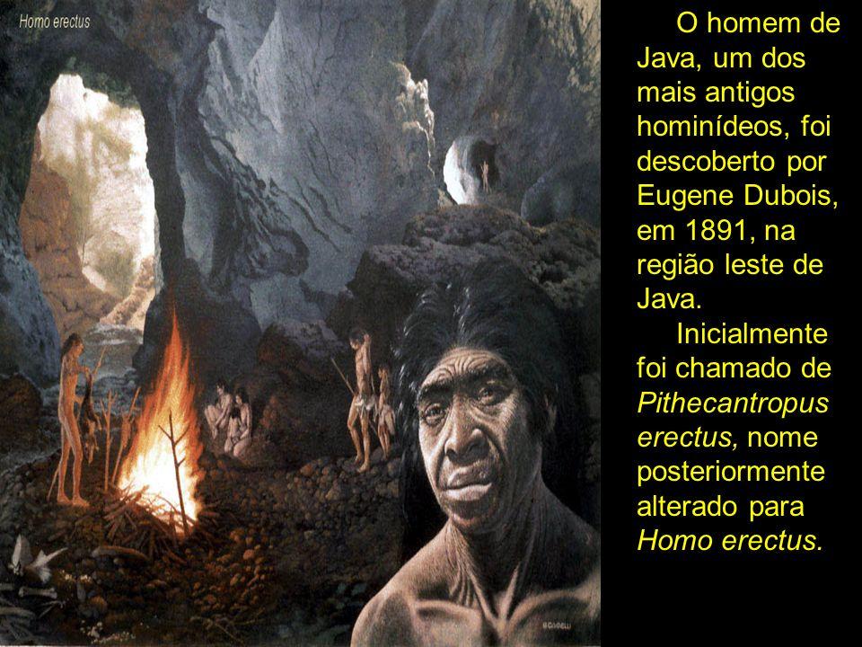 O homem de Java, um dos mais antigos hominídeos, foi descoberto por Eugene Dubois, em 1891, na região leste de Java.