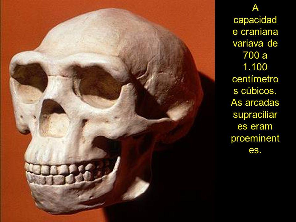 A capacidade craniana variava de 700 a 1. 100 centímetros cúbicos