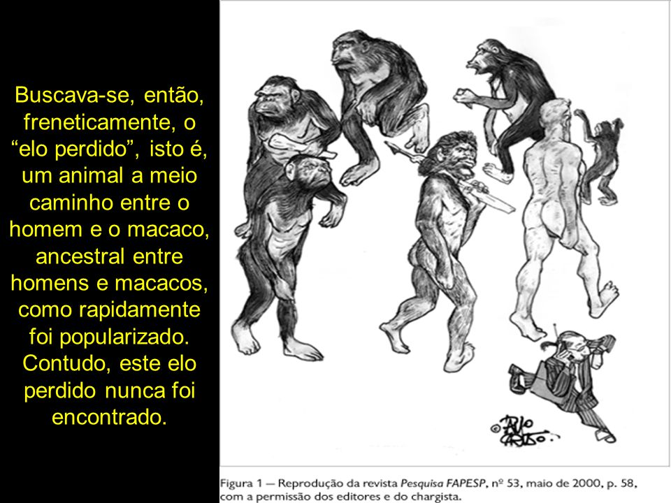 Buscava-se, então, freneticamente, o elo perdido , isto é, um animal a meio caminho entre o homem e o macaco, ancestral entre homens e macacos, como rapidamente foi popularizado.