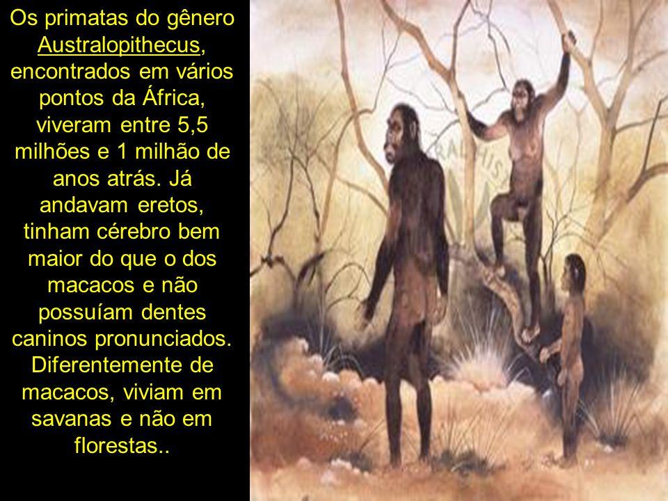 Os primatas do gênero Australopithecus, encontrados em vários pontos da África, viveram entre 5,5 milhões e 1 milhão de anos atrás.
