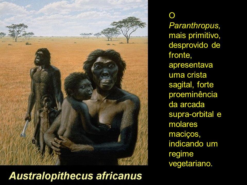 O Paranthropus, mais primitivo, desprovido de fronte, apresentava uma crista sagital, forte proeminência da arcada supra-orbital e molares maciços, indicando um regime vegetariano.