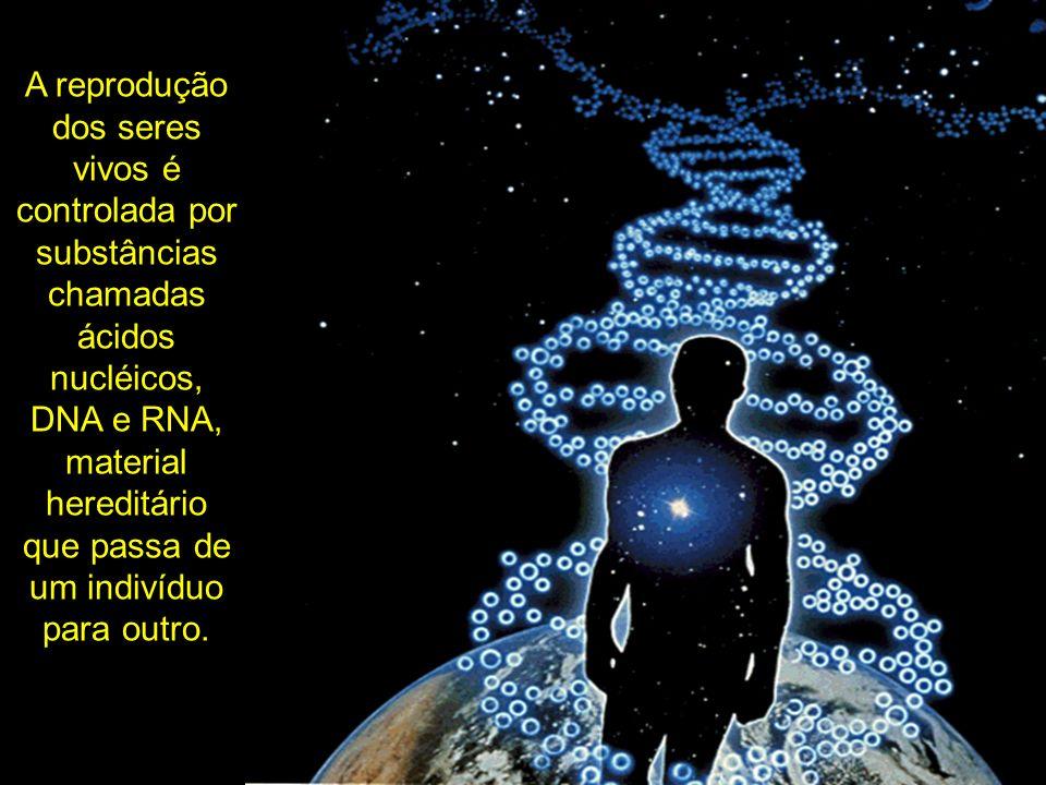 A reprodução dos seres vivos é controlada por substâncias chamadas ácidos nucléicos, DNA e RNA, material hereditário que passa de um indivíduo para outro.