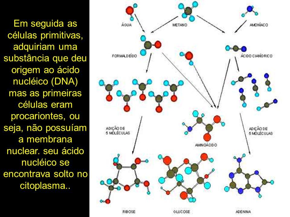 Em seguida as células primitivas, adquiriam uma substância que deu origem ao ácido nucléico (DNA) mas as primeiras células eram procariontes, ou seja, não possuíam a membrana nuclear.