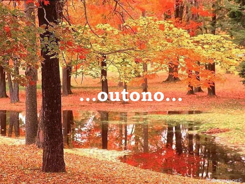 ...outono... Educamor©