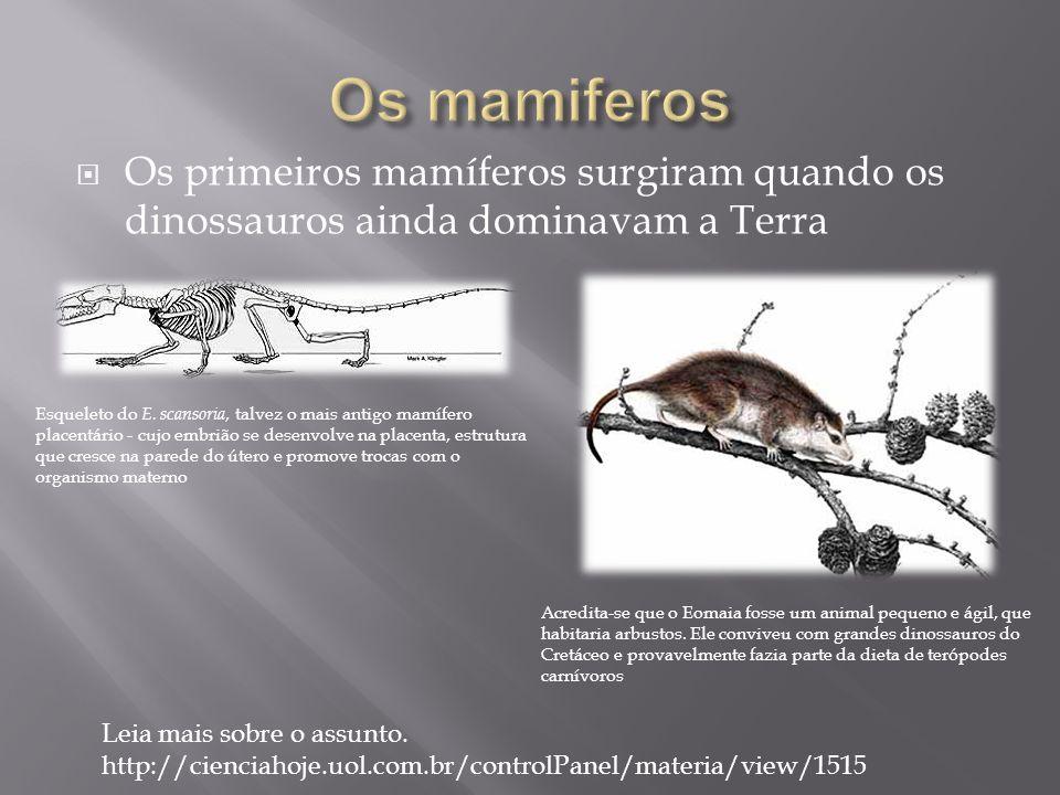 Os mamiferos Os primeiros mamíferos surgiram quando os dinossauros ainda dominavam a Terra.