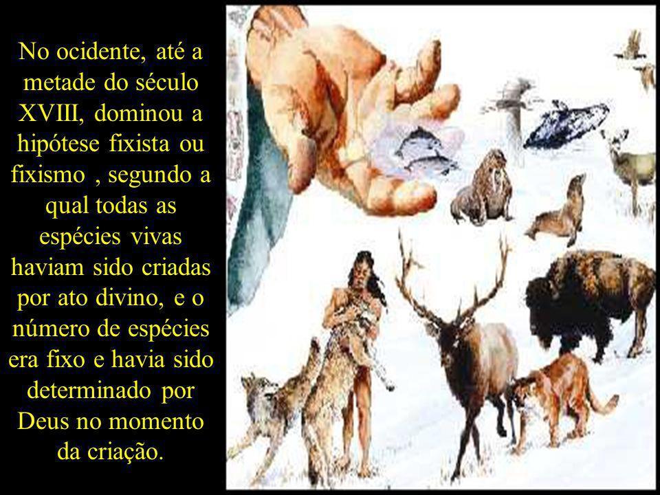 No ocidente, até a metade do século XVIII, dominou a hipótese fixista ou fixismo , segundo a qual todas as espécies vivas haviam sido criadas por ato divino, e o número de espécies era fixo e havia sido determinado por Deus no momento da criação.