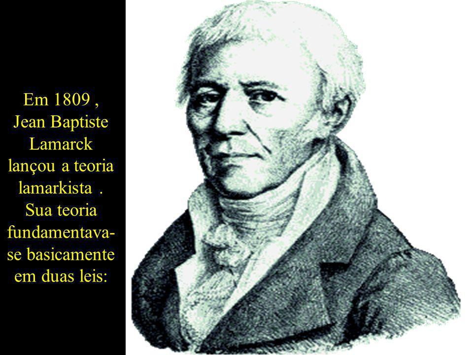 Em 1809 , Jean Baptiste Lamarck lançou a teoria lamarkista