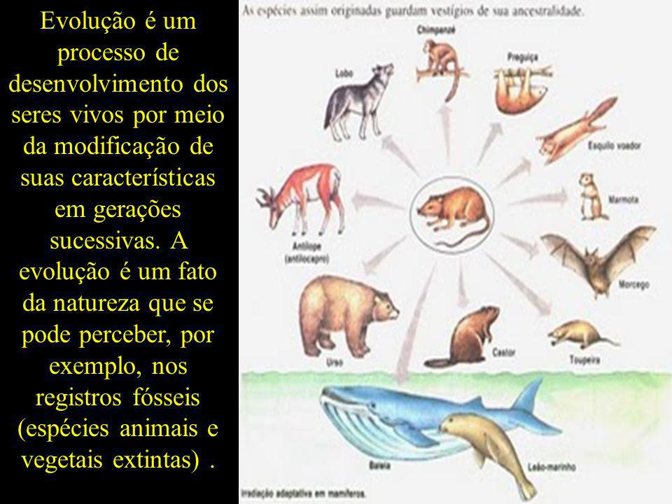 Evolução é um processo de desenvolvimento dos seres vivos por meio da modificação de suas características em gerações sucessivas.