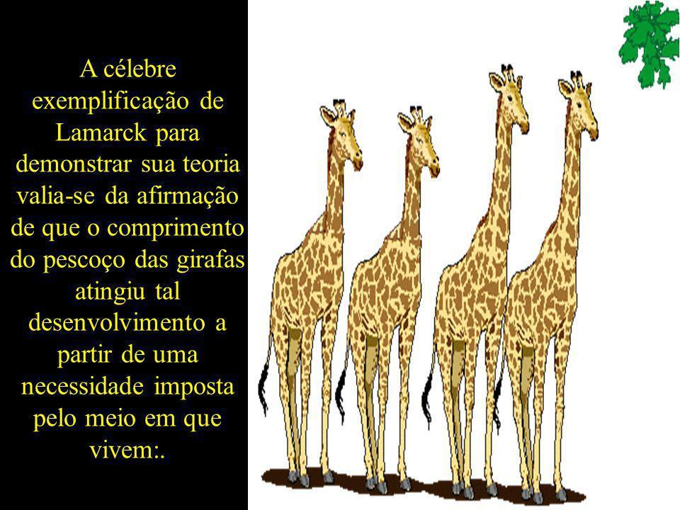 A célebre exemplificação de Lamarck para demonstrar sua teoria valia-se da afirmação de que o comprimento do pescoço das girafas atingiu tal desenvolvimento a partir de uma necessidade imposta pelo meio em que vivem:.