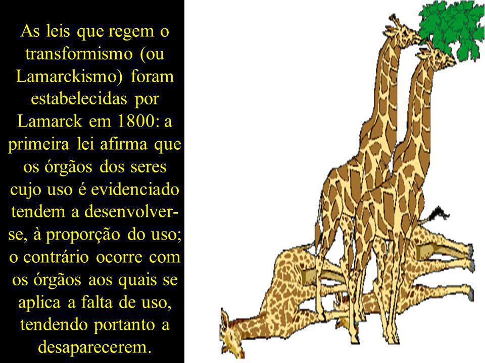 As leis que regem o transformismo (ou Lamarckismo) foram estabelecidas por Lamarck em 1800: a primeira lei afirma que os órgãos dos seres cujo uso é evidenciado tendem a desenvolver-se, à proporção do uso; o contrário ocorre com os órgãos aos quais se aplica a falta de uso, tendendo portanto a desaparecerem.