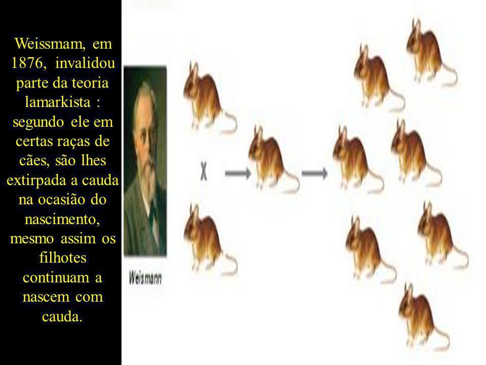 Weissmam, em 1876, invalidou parte da teoria lamarkista : segundo ele em certas raças de cães, são lhes extirpada a cauda na ocasião do nascimento, mesmo assim os filhotes continuam a nascem com cauda.