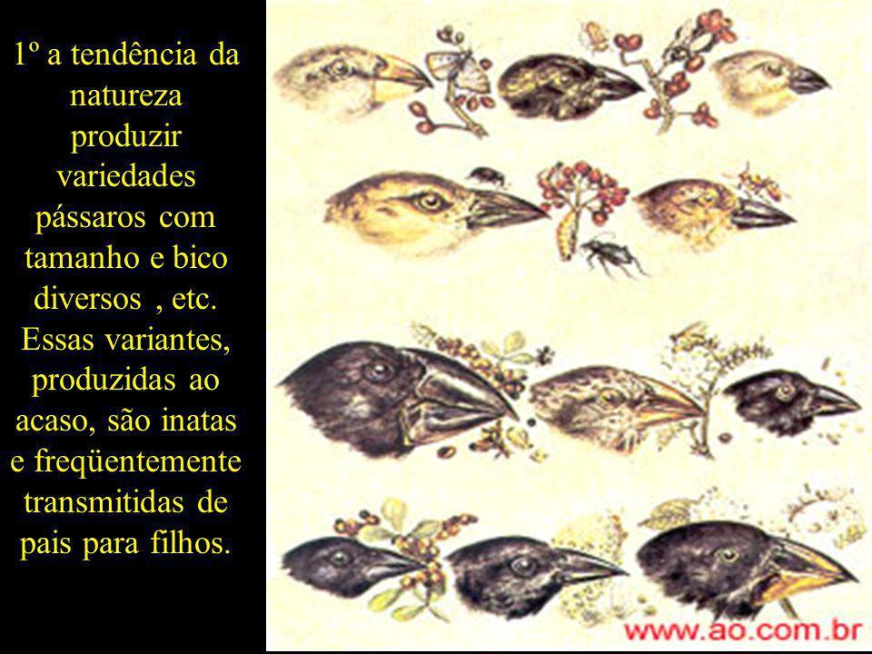 1º a tendência da natureza produzir variedades pássaros com tamanho e bico diversos , etc.