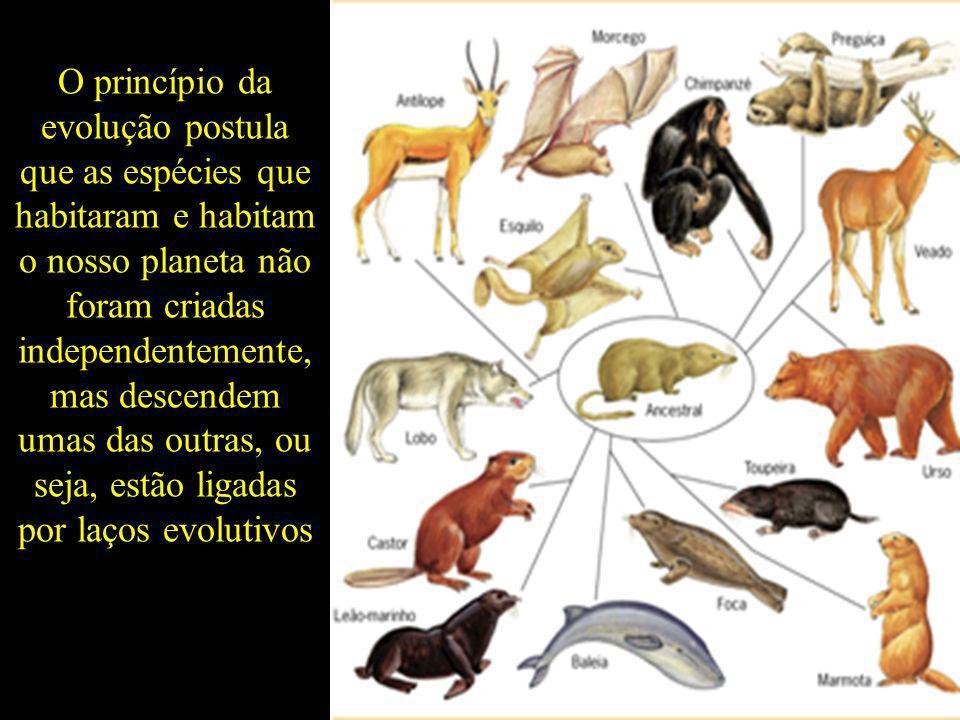 O princípio da evolução postula que as espécies que habitaram e habitam o nosso planeta não foram criadas independentemente, mas descendem umas das outras, ou seja, estão ligadas por laços evolutivos