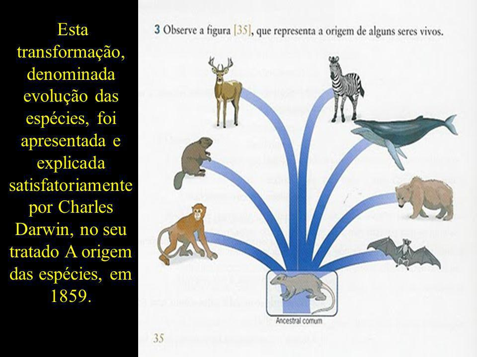 Esta transformação, denominada evolução das espécies, foi apresentada e explicada satisfatoriamente por Charles Darwin, no seu tratado A origem das espécies, em 1859.