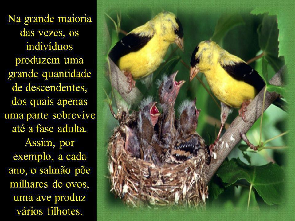 Na grande maioria das vezes, os indivíduos produzem uma grande quantidade de descendentes, dos quais apenas uma parte sobrevive até a fase adulta.