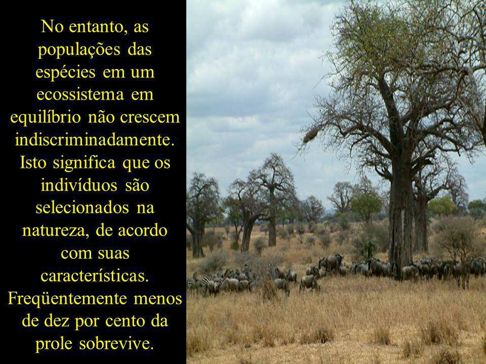 No entanto, as populações das espécies em um ecossistema em equilíbrio não crescem indiscriminadamente.