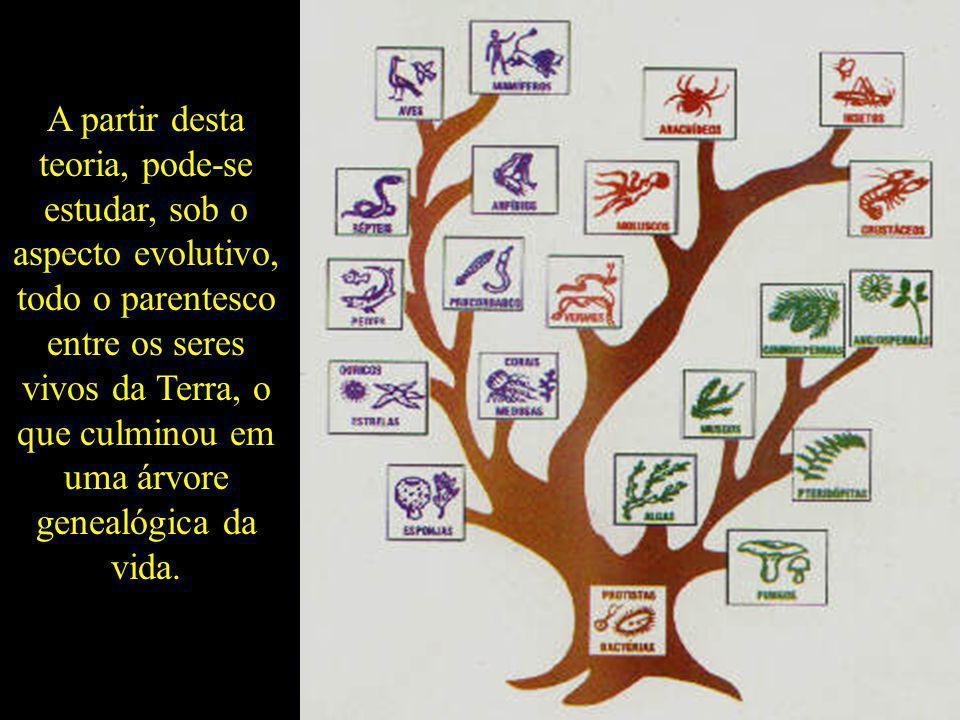 A partir desta teoria, pode-se estudar, sob o aspecto evolutivo, todo o parentesco entre os seres vivos da Terra, o que culminou em uma árvore genealógica da vida.