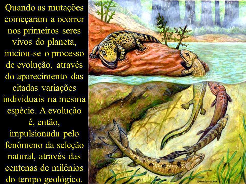Quando as mutações começaram a ocorrer nos primeiros seres vivos do planeta, iniciou-se o processo de evolução, através do aparecimento das citadas variações individuais na mesma espécie.