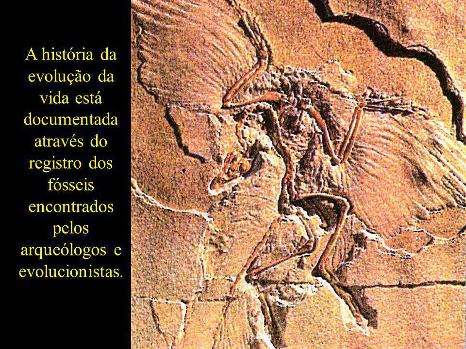 A história da evolução da vida está documentada através do registro dos fósseis encontrados pelos arqueólogos e evolucionistas.