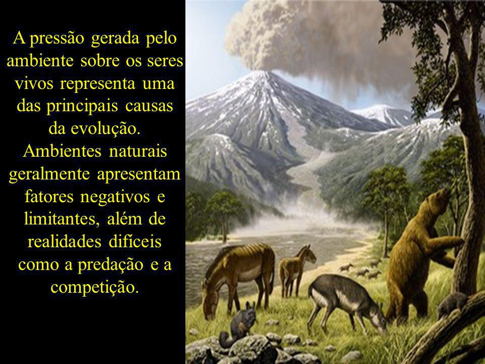 A pressão gerada pelo ambiente sobre os seres vivos representa uma das principais causas da evolução.