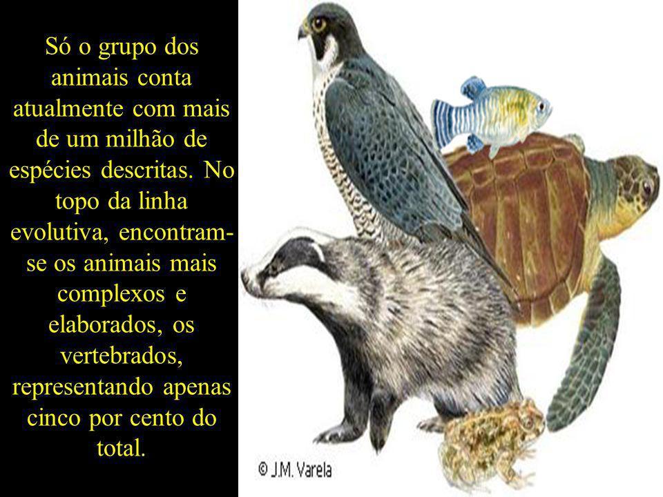 Só o grupo dos animais conta atualmente com mais de um milhão de espécies descritas.