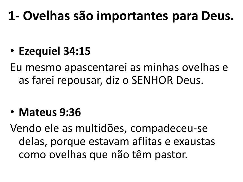 1- Ovelhas são importantes para Deus.