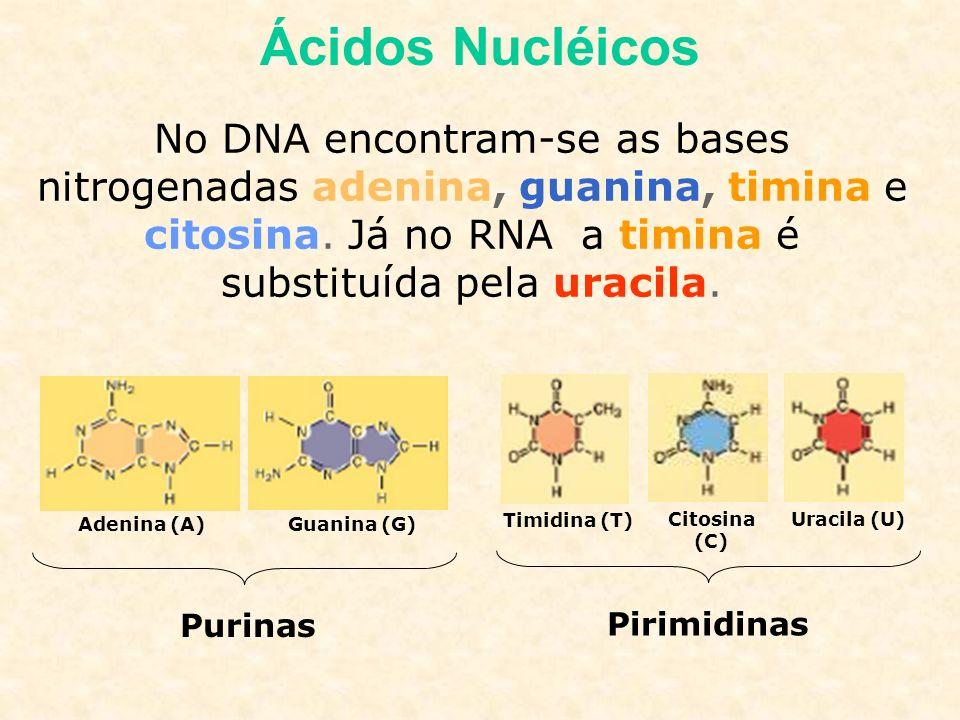 Ácidos Nucléicos No DNA encontram-se as bases nitrogenadas adenina, guanina, timina e citosina. Já no RNA a timina é substituída pela uracila.