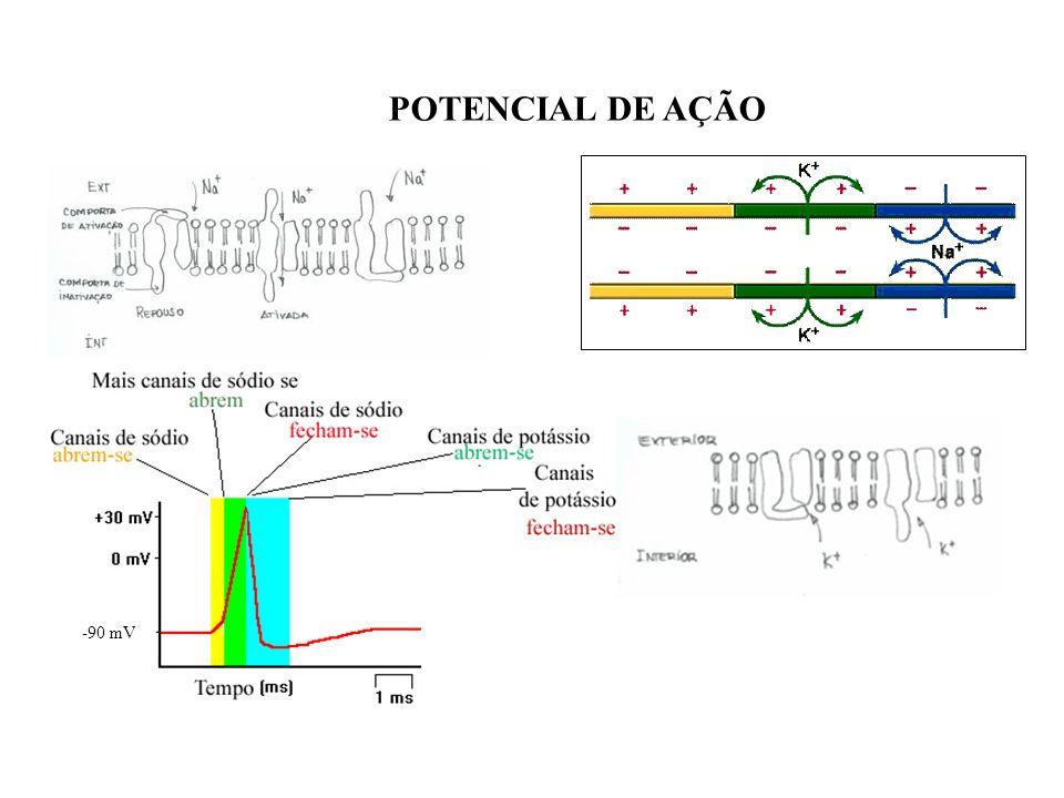 POTENCIAL DE AÇÃO -90 mV