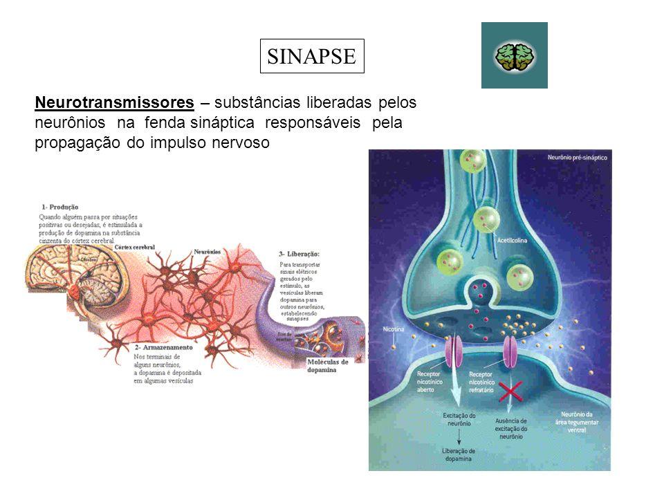 SINAPSENeurotransmissores – substâncias liberadas pelos neurônios na fenda sináptica responsáveis pela propagação do impulso nervoso.