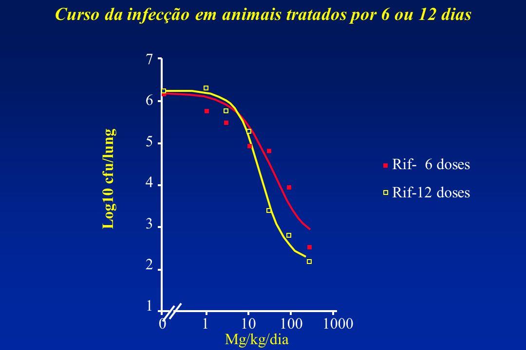 Curso da infecção em animais tratados por 6 ou 12 dias