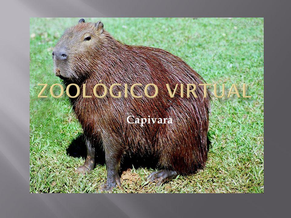 Zoológico Virtual Capivara