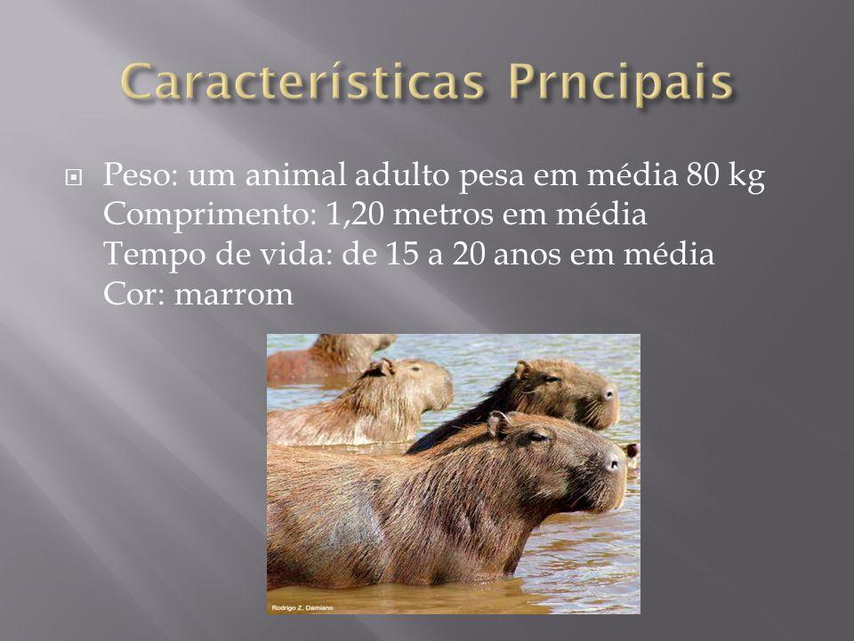 Características Prncipais