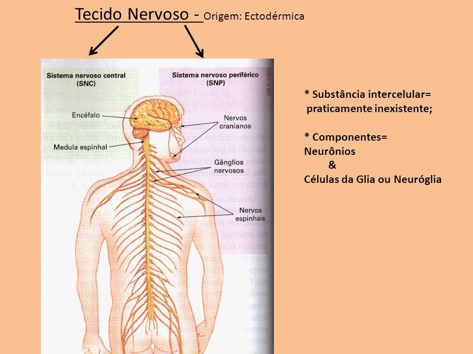Tecido Nervoso - Origem: Ectodérmica