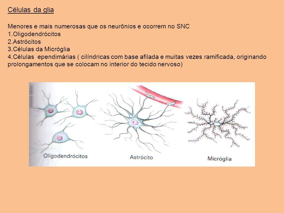 Células da gliaMenores e mais numerosas que os neurônios e ocorrem no SNC. Oligodendrócitos. Astrócitos.