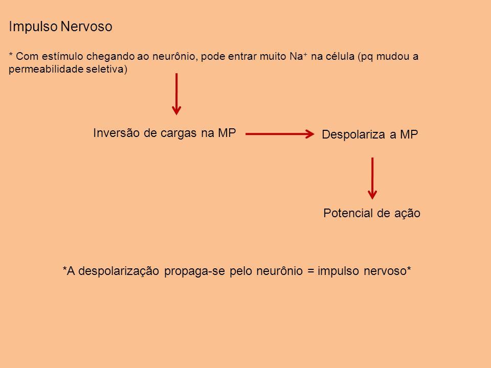 Impulso Nervoso Inversão de cargas na MP Despolariza a MP