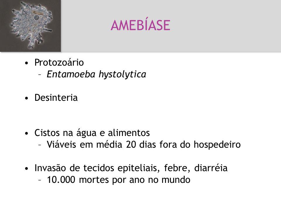 AMEBÍASE Amebíase Protozoário Entamoeba hystolytica Desinteria