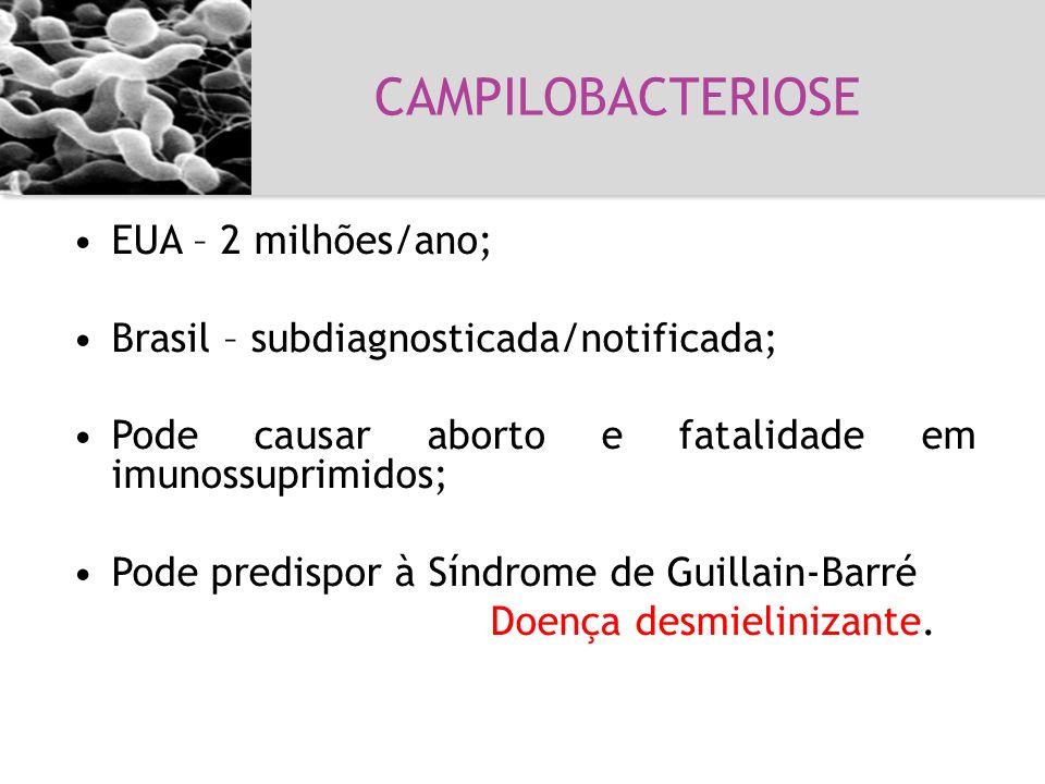 CAMPILOBACTERIOSE Campilobacteriose EUA – 2 milhões/ano;