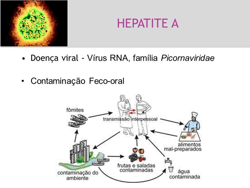 HEPATITE A Hepatite A Doença viral - Vírus RNA, família Picornaviridae