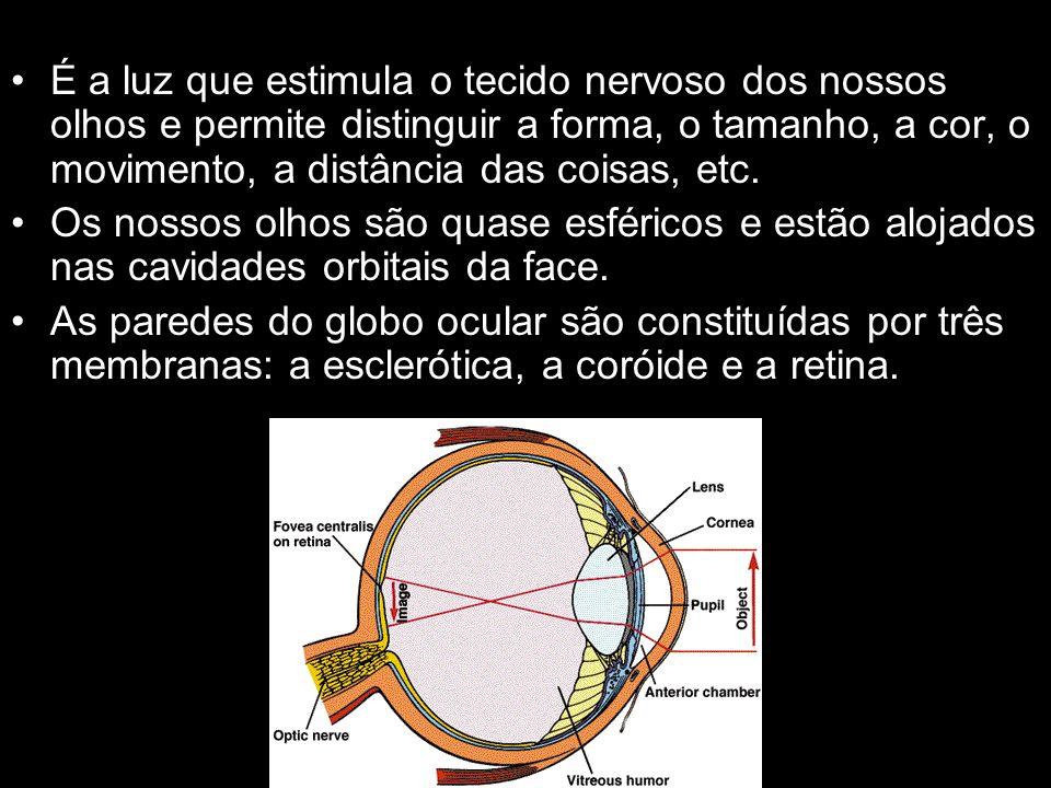 É a luz que estimula o tecido nervoso dos nossos olhos e permite distinguir a forma, o tamanho, a cor, o movimento, a distância das coisas, etc.