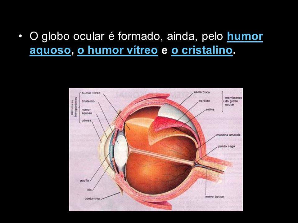 O globo ocular é formado, ainda, pelo humor aquoso, o humor vítreo e o cristalino.