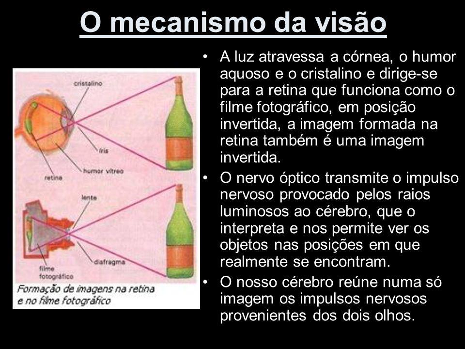 O mecanismo da visão